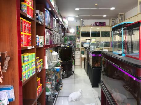 Petshop with mezzanine Available For Sale
