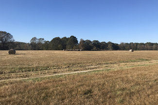 Cattle Ranch in Mississippi