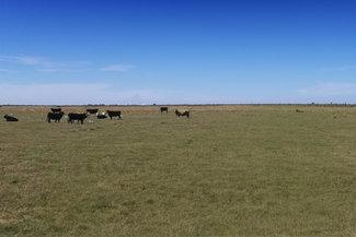Sunset Trails Farm - 1,342.4 ± ACRES