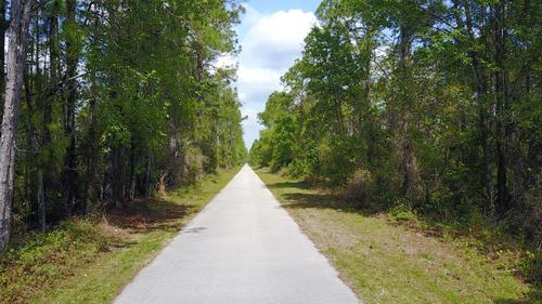 Green Swamp East Tract - 226.5 acres