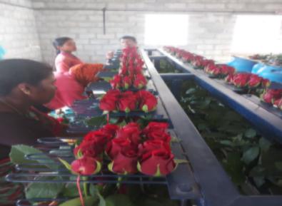 Asset For Sale: Dutch Rose Farm