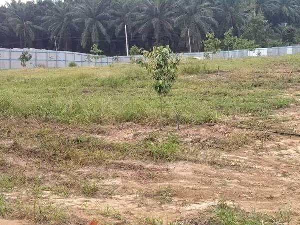 Agricultural Land For Sale At Lenggeng, Negeri Sembilan
