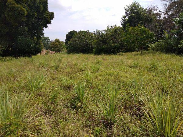 Residential Land For Sale At Lenggeng, Negeri Sembilan