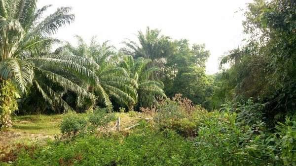 Agricultural Land For Sale At Kampung Jenderam Hulu, Jenderam