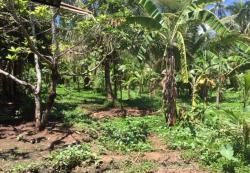Land/Farm-Alfonso Cavite