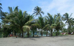 Land for Sale (Beachfront)
