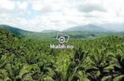 Plot of 25, 000 acres Oil Palm land Kinabatangan, Sabah