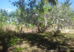 Vacant Lot-Bohol