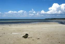 Beachfront For Sale