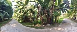 Lot For Sale in Dumaguete