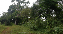 Residential Farm Lot with Fruit bearing trees