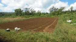 4000 m² – Organic 1 Acre Farm For Sale A Investment On A Tropical Island
