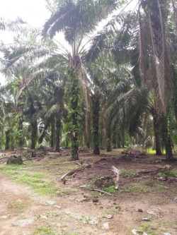 Agricultural Land For Sale At Kota Tinggi, Johor