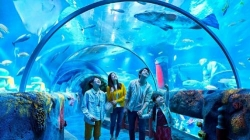 Holiday staycation at legoland and Sea Life Malaysia. Book now!