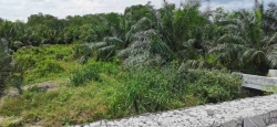 Agricultural Land For Sale At Pontian, Johor, Malaysia