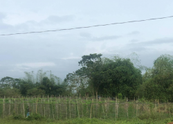 Farm Lot: Nueva Ecija