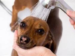 Pet Grooming Business
