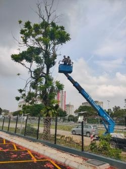Service Cutting Tree