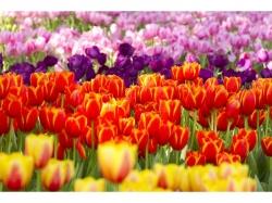 Flower Bulb Fundraising & Wholesale Company, East Coast States