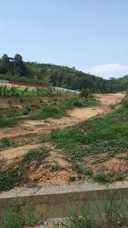 Durian Farm For Sale