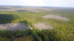 Green Swamp East, North Polk County